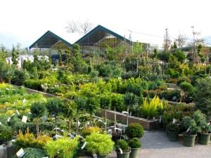 arboretum-vrtni-center